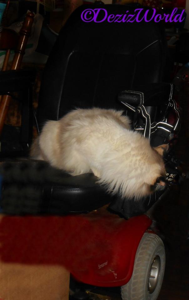 Raena chews on the wheelchair bag