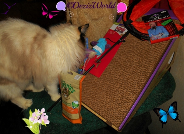 Raena checks out her Birthday loot from Chewy