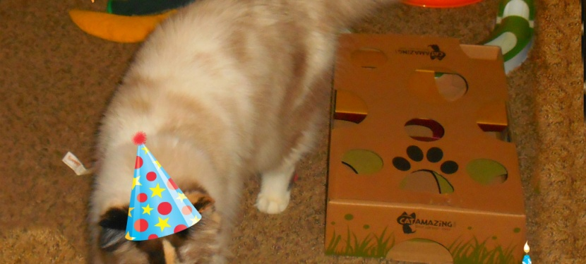 RaenaBelle's 1st Birthday: It's AParty