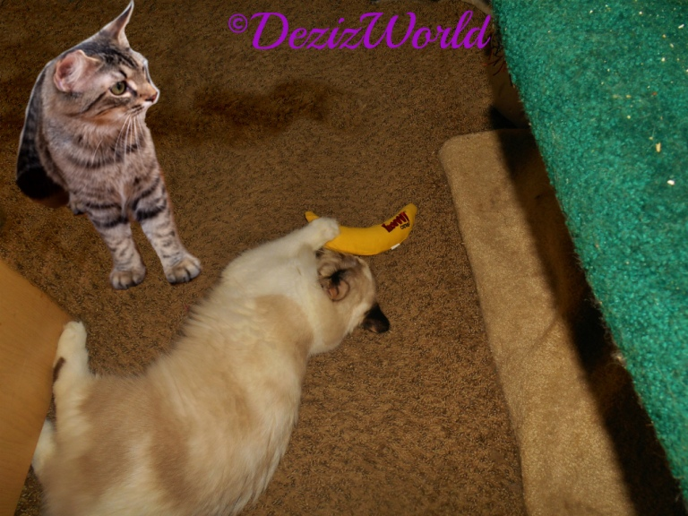 Raena plays with the Yeowww nip nanner while simon looks on