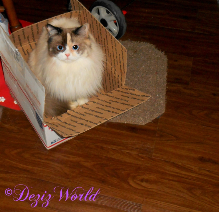 Raena sits in a box that had birthday gifts from the Tomcat family