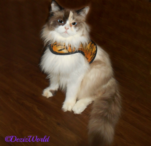 Raena sits posing in her tiger harness