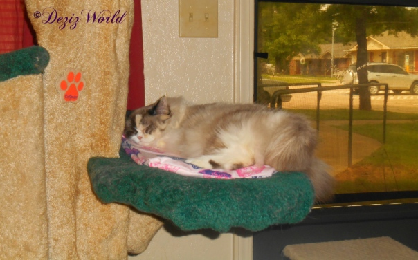Raena sleeps on birthday nip mat on the Liberty cat tree
