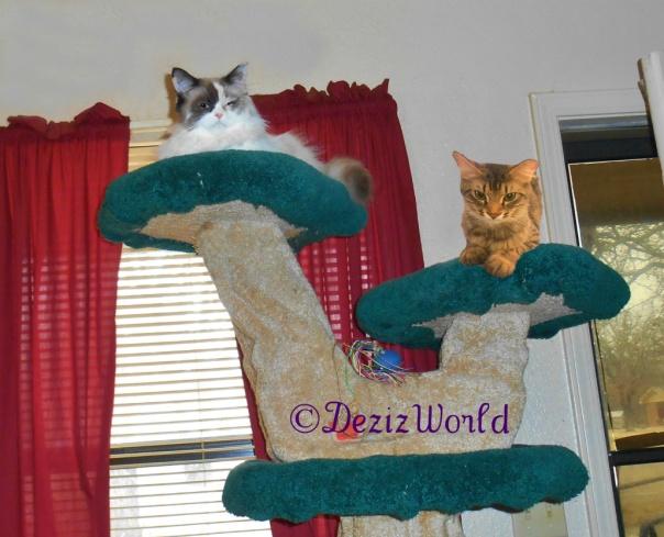 Raena and Simon lay on top of the Liberty Tree