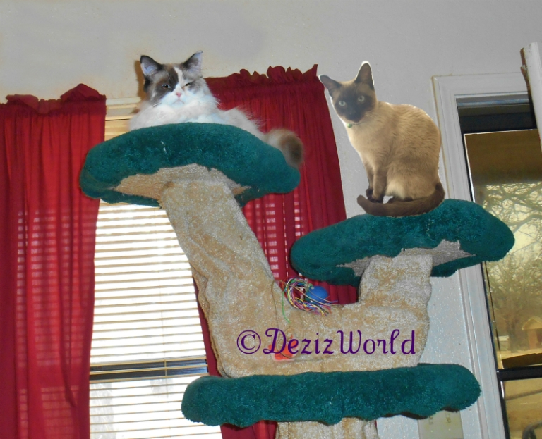 Raena and Alberto sit on the Liberty Cat Tree