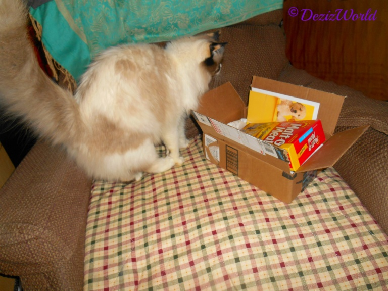 Raena with gift box from Cat Scouts Hermes, Chip, their sister Chessie and their mom and dad.