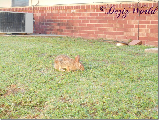 dw-bunny 9323