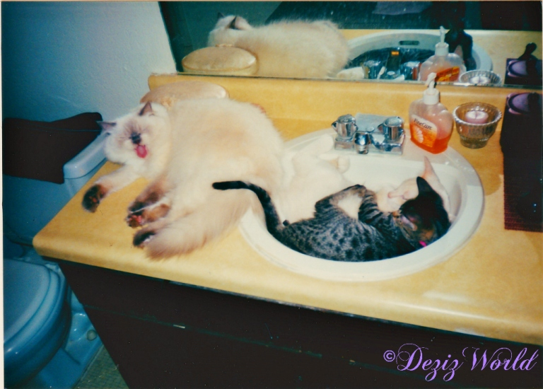 Devon, Lucky and Lexi on bathroom sink
