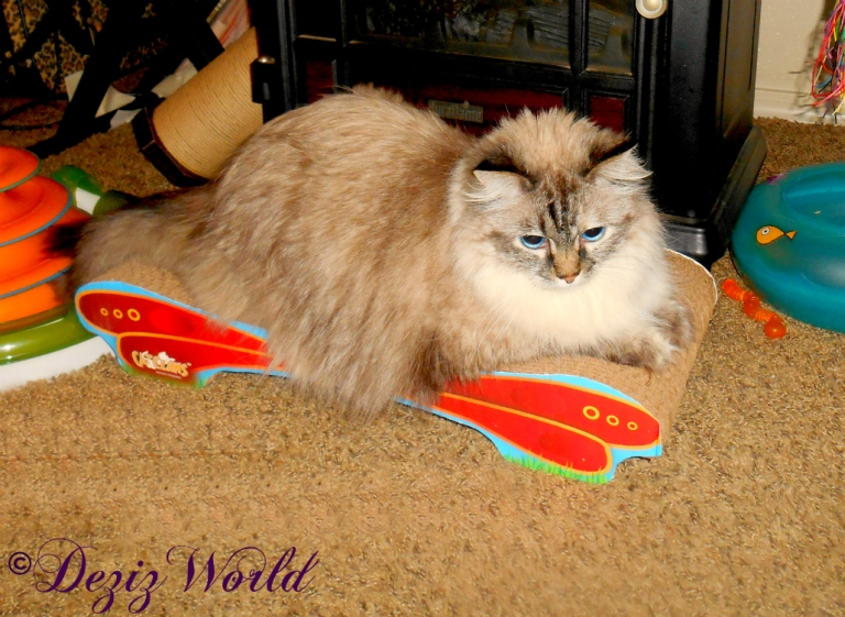 Dezi lays on the MAX Butterfly Cat Scratcher