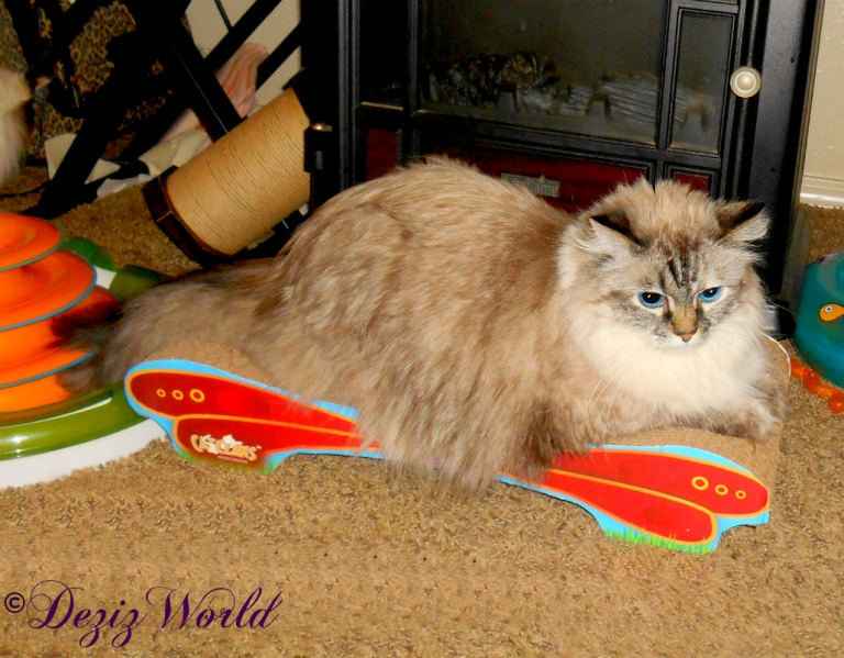 Dezi lays on the Cat Claws butterfly cat scratcher