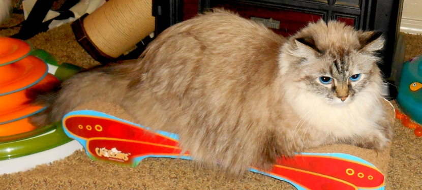 Chatting Cats: The Purrfect Solution for Your Cat's Need toScratch
