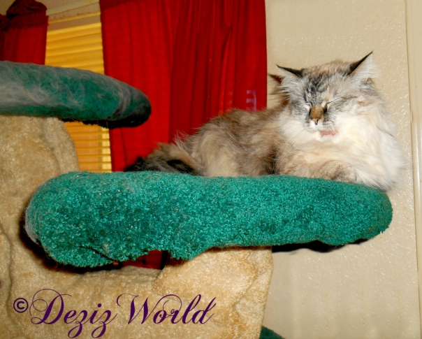Dezi laying atop the Liberty cat tree with her mouth open