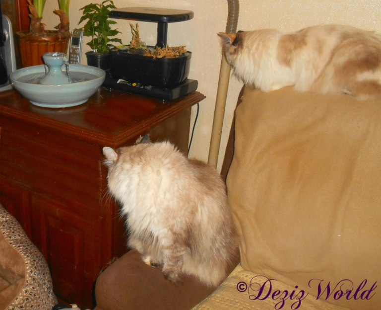 Dezi and Raena check ou the new Thirsty Cat fountain