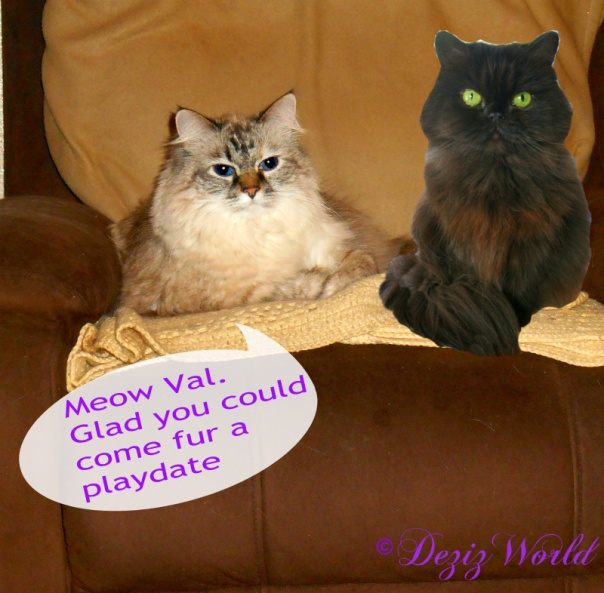 Dezi and Valentine in the chair