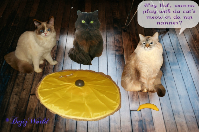 Raena, Valentine and Dezi with the cat's meow and nip nanner