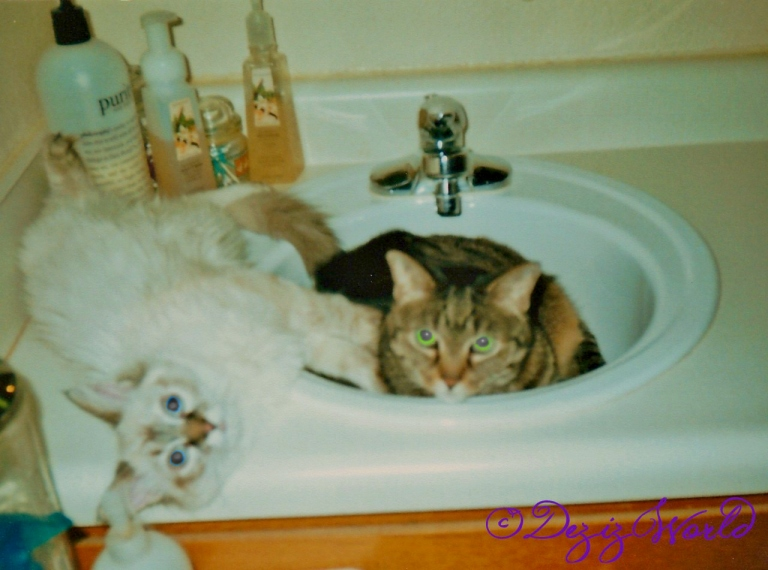 Devon and Lexi together on sink