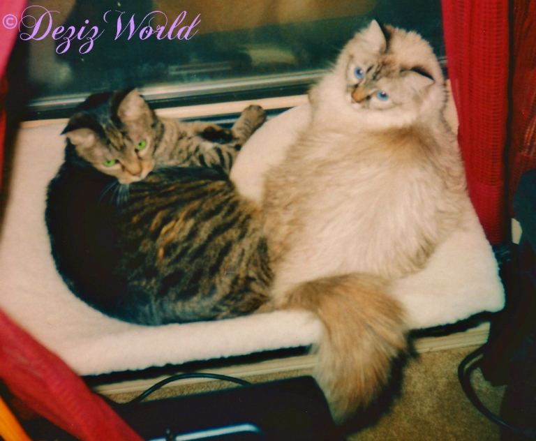 Lexi and Dezi lay together on window perch