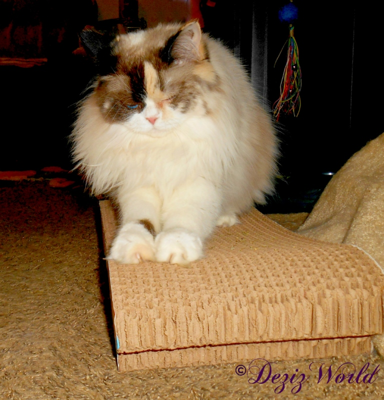 Raena ;ays on the butterfly cat scratcher