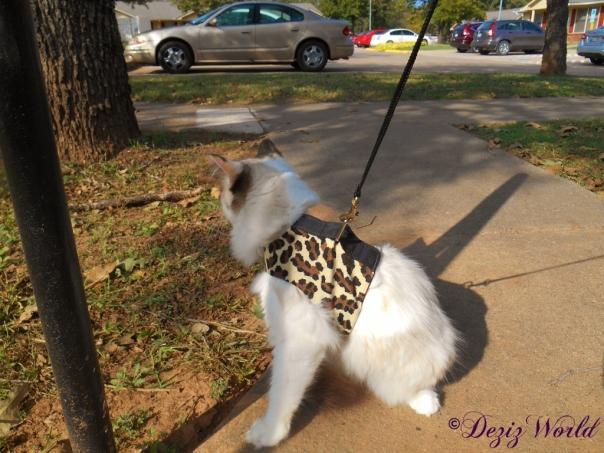 Raena goes for a walk outside