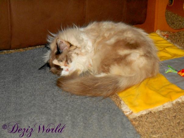 Raena sleeps on cat mat