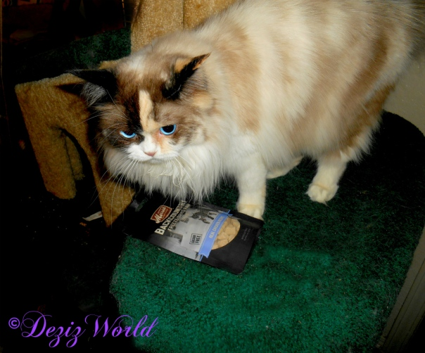 Raena with Merrick Freeze dried cat treats