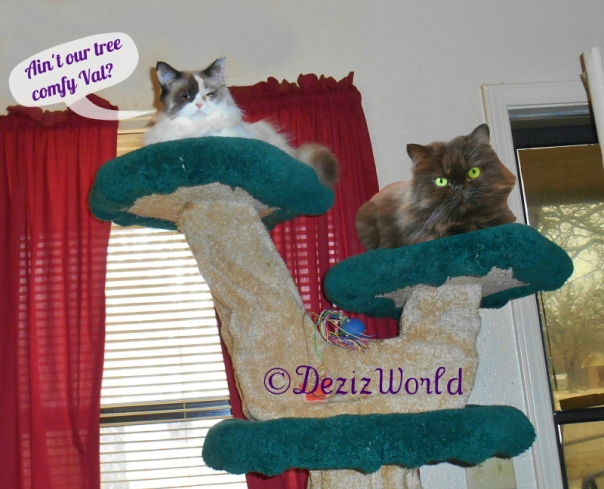 Raena and Valentine lay on the Liberty Cat Tree