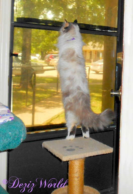 Raena stands on perch and looks out door
