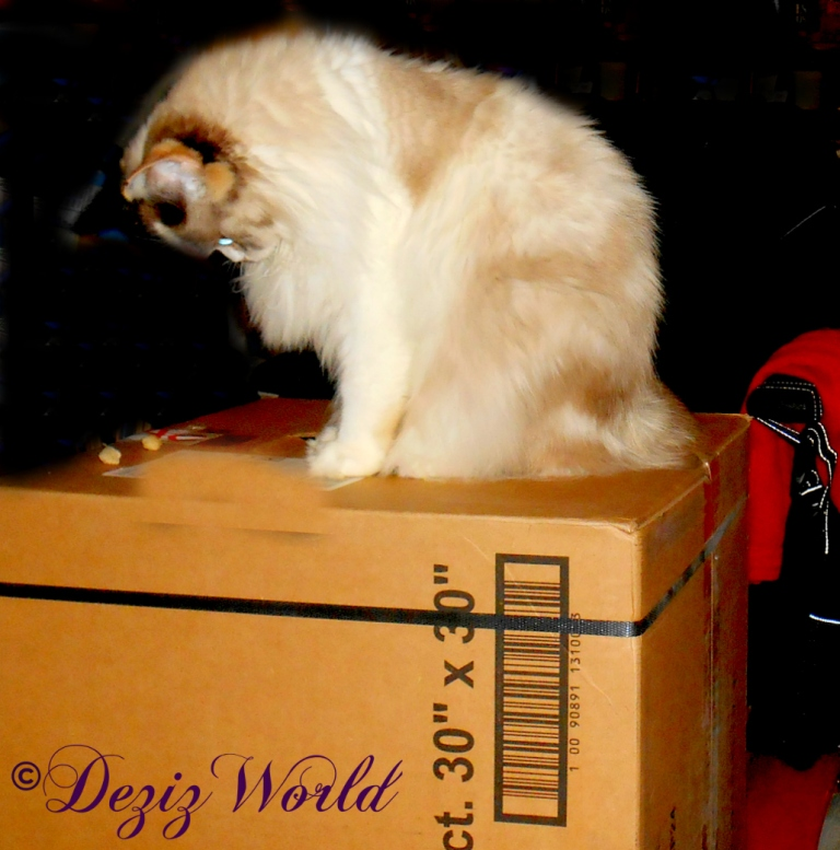 Raena sits atop a box and plays with a treat
