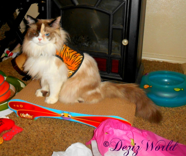 Raena sits on butterfly scratcher in harness
