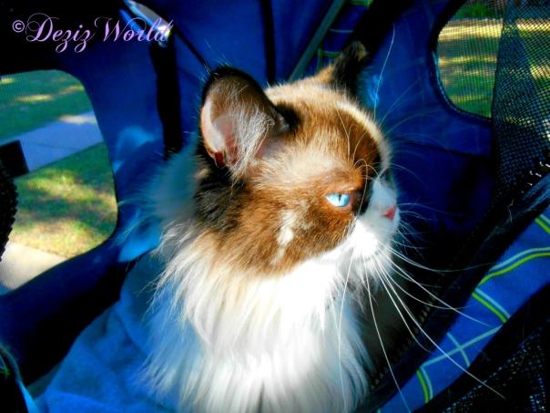 Raena's profile in the stroller