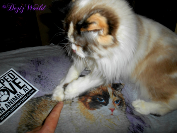 Raena sits on the personalized tee shirt from Animal Hearted