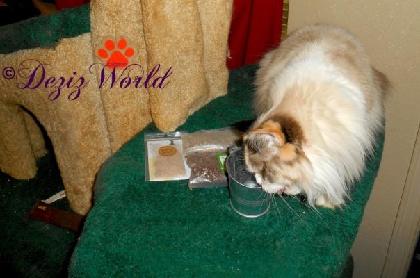Raena bites the Cat grass pail from Valentine