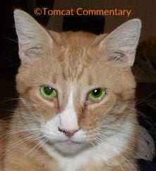 Timmy Tomcat selfie