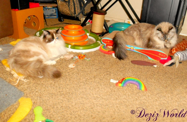 Dezi lays on scratcher while Raena lays on nip mat