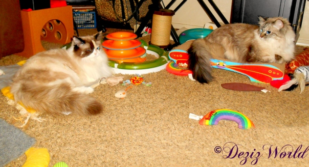 Dezi sits on scratcher and looks back at Raena laying on the nip mat