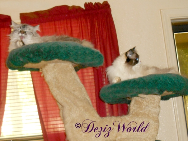 Dezi and Raena bather atop the Liberty cat tree