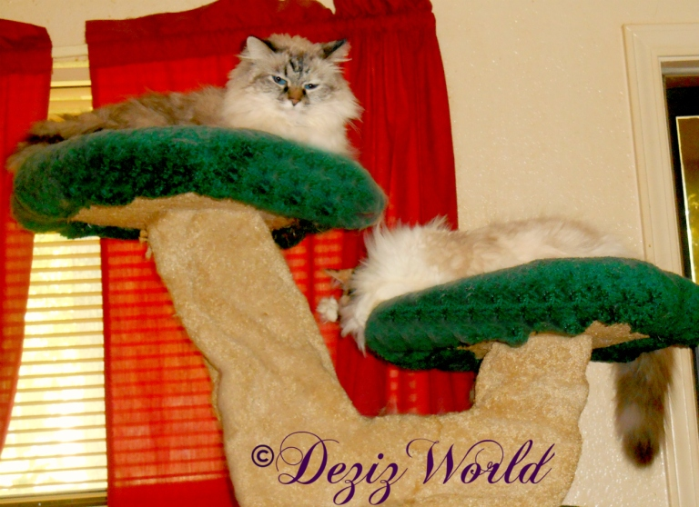Dezi and Raena lay atop the Liberty cat tree