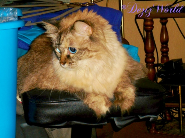 Dezi lays on piano bench after apartment flood