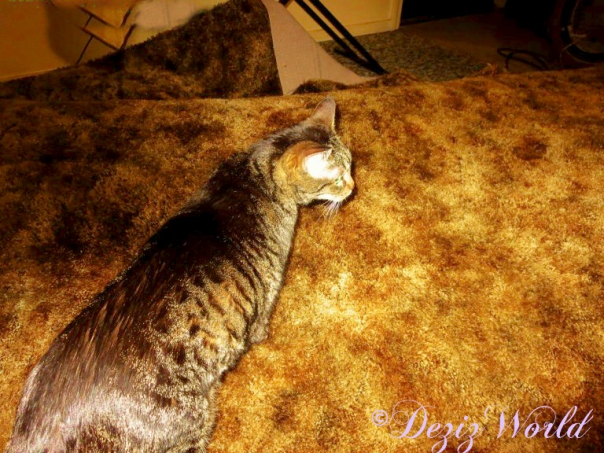 Lexi floats on carpet after flood with dryers blowing