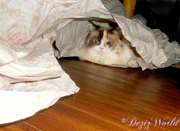 Raena peeking out from under packing paper