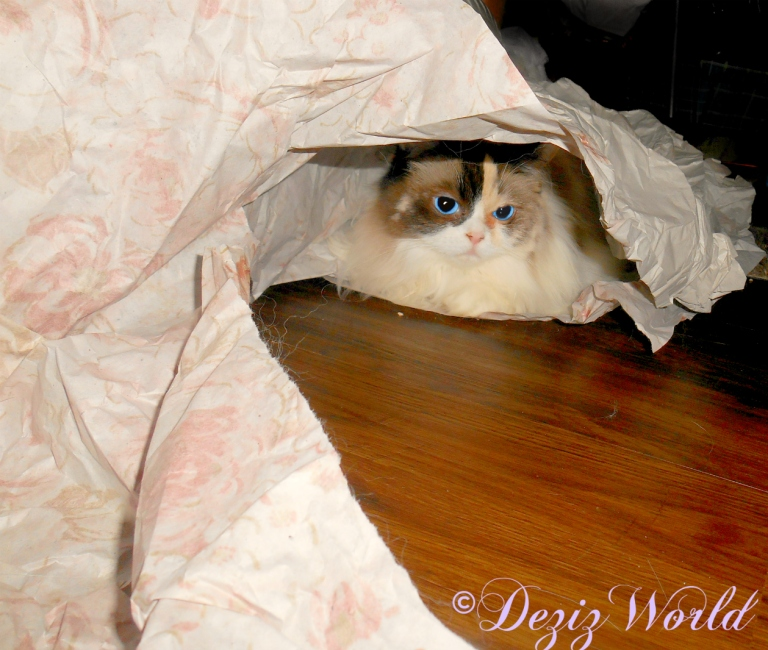 Raena pees out from under the packing paper