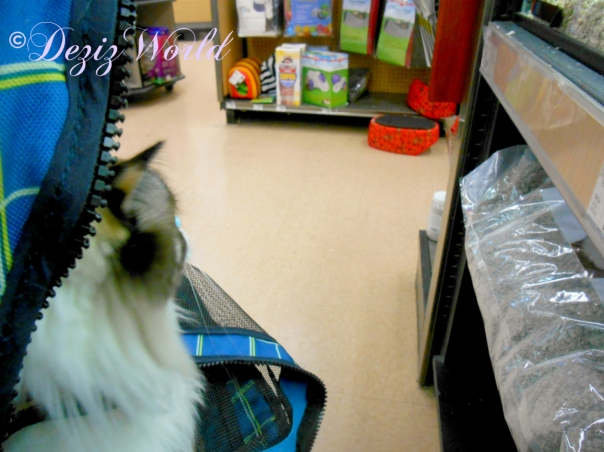 Raena looks at the mice and rats at petco