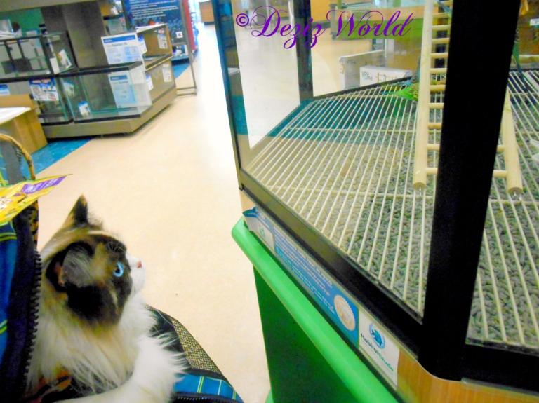 Raena checks out the birds at petco