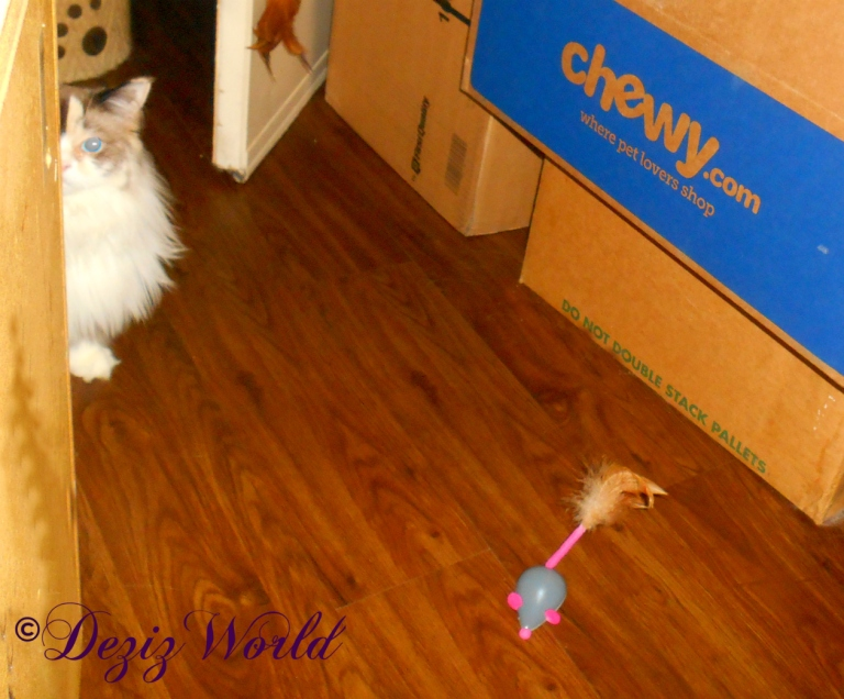 Raena peeks around the corner at the remote controlled mouse