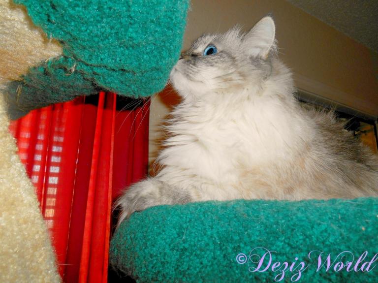 Dezi profile atop the liberty cat tree