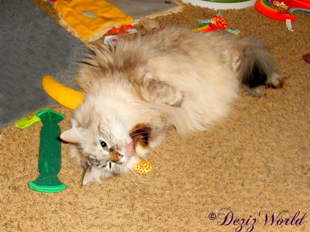 Dezi bathes paw while laying on Yeowww nip toy
