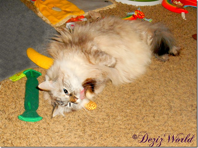 Dezi bathes paw while laying on Yeowww nip toy