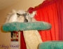 Chatting Cats: Where's MyBite