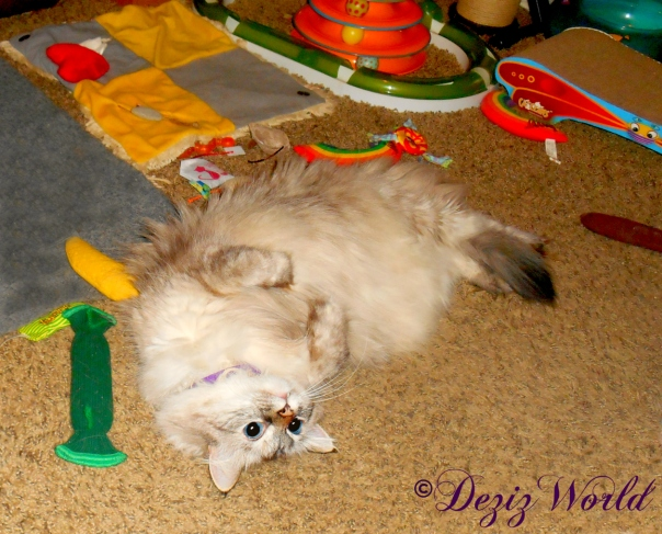 Dezi rolls around and plays with nip toys