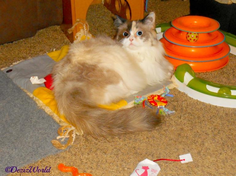Raena lays on floor